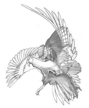 Pheasants 1 & 3