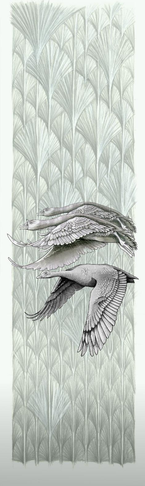 11 Geese flying R