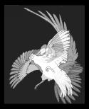 pheasants-1-3-w900-h900