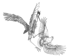 Crane & eagle XxX