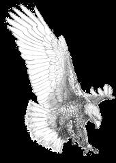 Eagle 2 x